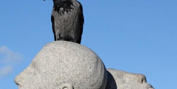 La familia de los córvidos ocupa uno de los primeros puestos en la lista de aves inteligentes. Foto: Pixabay.