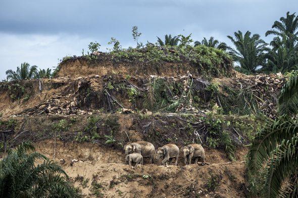 Supervivientes del aceite de palma. Foto de Aaron Gekoski.