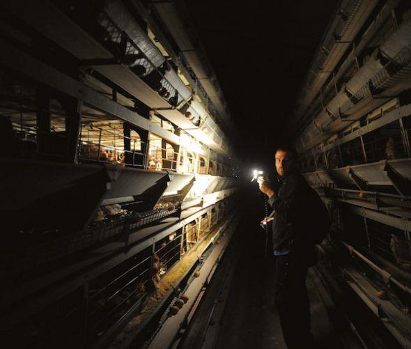 José Valle (cofundador de Igualdad Animal), iluminando la oscuridad, granja de gallinas en batería, España, 2009.