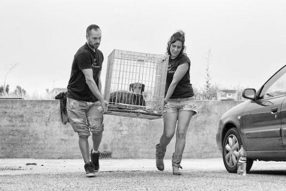 Víctor y Katya de E.R.A han conseguido su objetivo de rescatar a Neli. Llevaba siete meses sola vagando por las calles de un pueblo de Toledo. Foto: Emilio Cuenca.