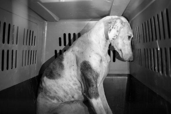 La Juani fue adoptada gracias a la colaboración de la asociación Animales Con Un Nuevo Rumbo. Foto: Emilio Cuenca.