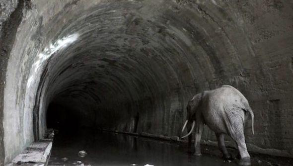 Txuspo Poyo. Expediente Túnel de la Engaña.