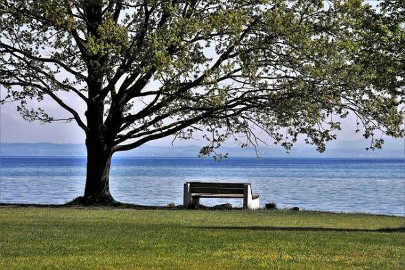 Un árbol brotando en primavera. Foto: Pixabay.