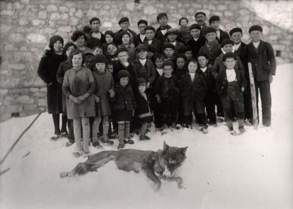 Grupo de niños y vecinos del pueblo de Saliencia junto a un lobo muerto, cazado en la Mortera por Álvaro y Donino hacia 1930. Foto de Carlos Flórez Lorenzo. Museo del Pueblo de Asturias.