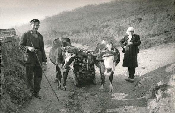 Paisanos transportando leña con una 'corza' en Somiedo en 1955. Foto de José Ramón Lueje. Museo del Pueblo de Asturias.