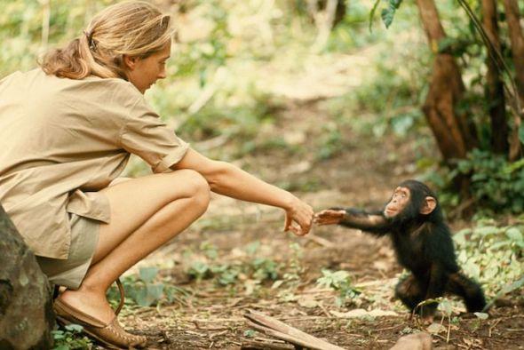 La primatóloga Jane Goodall fotografiada por Hugo Van Lawick.