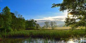 Los humedales son los ecosistemas más dañados en las últimas décadas. Foto: Pixabay.