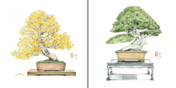 A la izquierda, un haya (Fagus Sylvatica) y un Enebro de China (Juniperus chinesi) a la derecha.