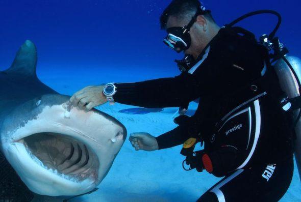 Karlos Simón jugando con un tiburón.