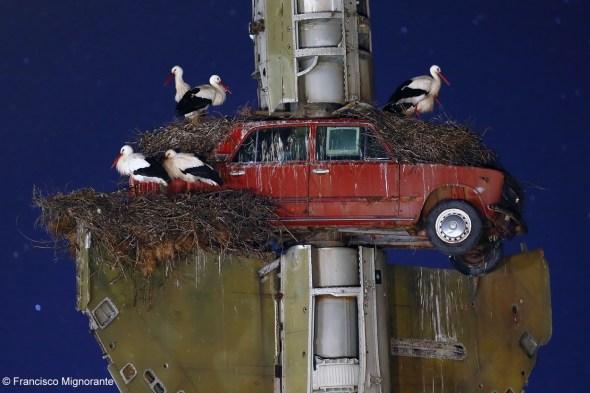 58. Francisco Mingorance, Stork art