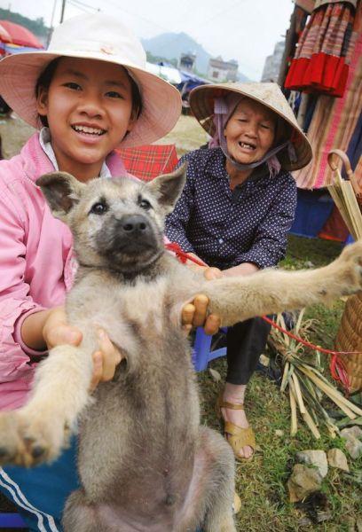 """Cachorros para comida. Mercado Bacha, Vietnam, 2009 """"Esta perrita nunca había sido querida o admirada por ningún ser humano. Nunca movió su cola ni intentó caminar. En cambio, al igual que ocurre con muchos 'animales para consumo', cuando nos mira a la cara, podemos sentir una emoción: el miedo""""."""