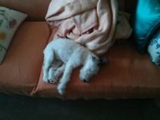 ύπνος βαθύς