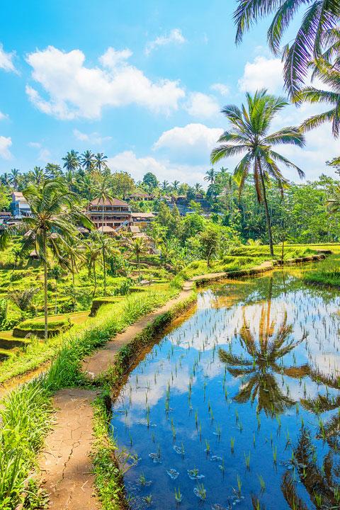 tegallalang-rice-terraces-bali-indonesia-09