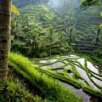 Tegallalang Rice Terrace, os arrozais mais visitados em Bali.