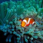 Nusa Penida, Dia 3 mergulho na Cristal Bay. Esse lugar é espetacular.