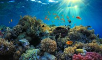 beautiful view of sea life