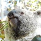 Wild Life Sydney Zoo, o pequeno zoológico da Darling Harbour.