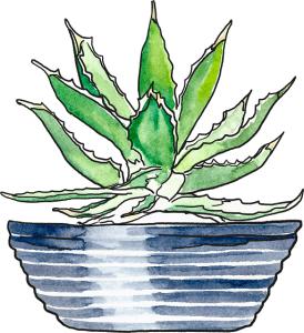 aloe-plant-this-angelena