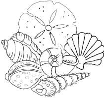 colorear conchas playa
