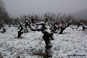 Viñas en invierno 23-12-2010 13-47-08