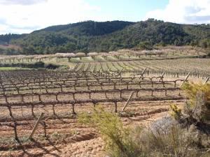Viñas de Sucés Vinícola