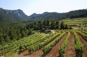 Viñas de Vinyes Domènech