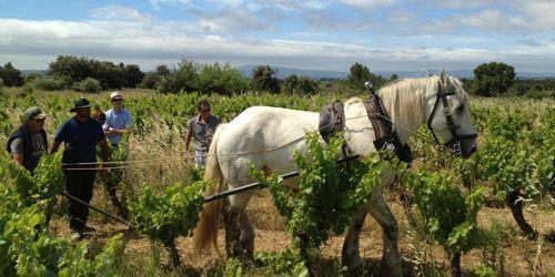 Arando en Julien Labet (www.ovini.fr)