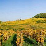 Recorrido por Vignerons y vinos del Jura: vinos por descubrir.