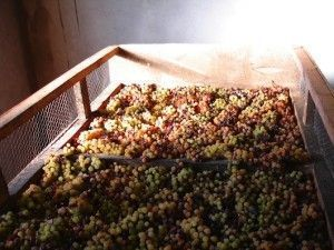 Vin de paille (www.blog-jura-vins.com)