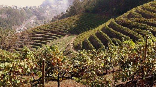 Viñedos de Madeira