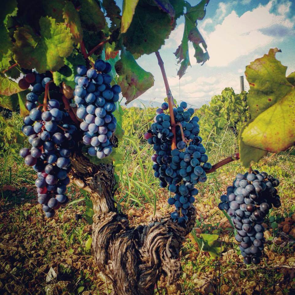Foto portada vinos de Mallorca