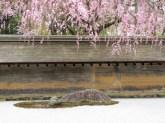 19-066-ryoan-ji-kyoto