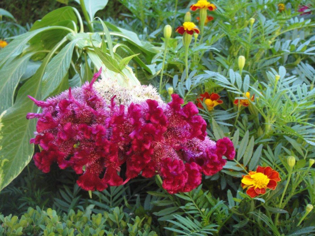 Flores en Granada