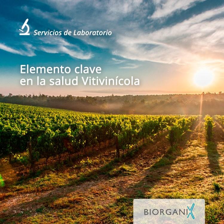 Elemento clave en la salud vitivinicola