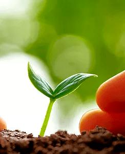 crédito para el sector agrícola