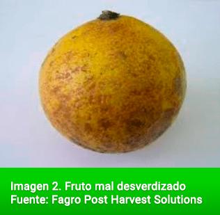 Fruto mal desverdizado Fuente: Fagro Post Harvest Solutions