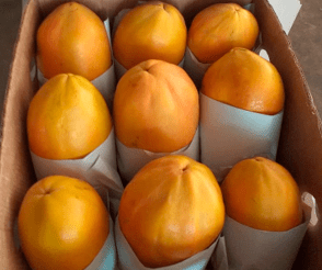 encerado-en-papaya-phs-fagro-protection