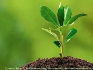 Celebrando el día mundial del medio ambiente saludable