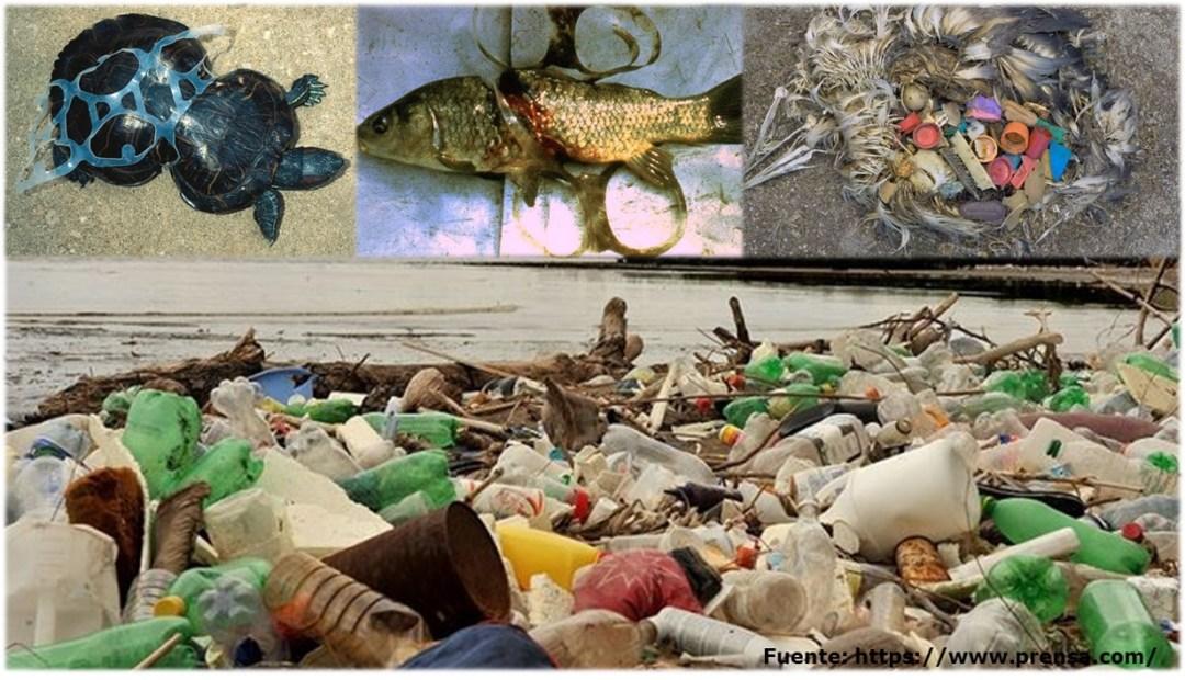 Rechaza el plástico descartable: contamina los mares y mata la fauna marina.