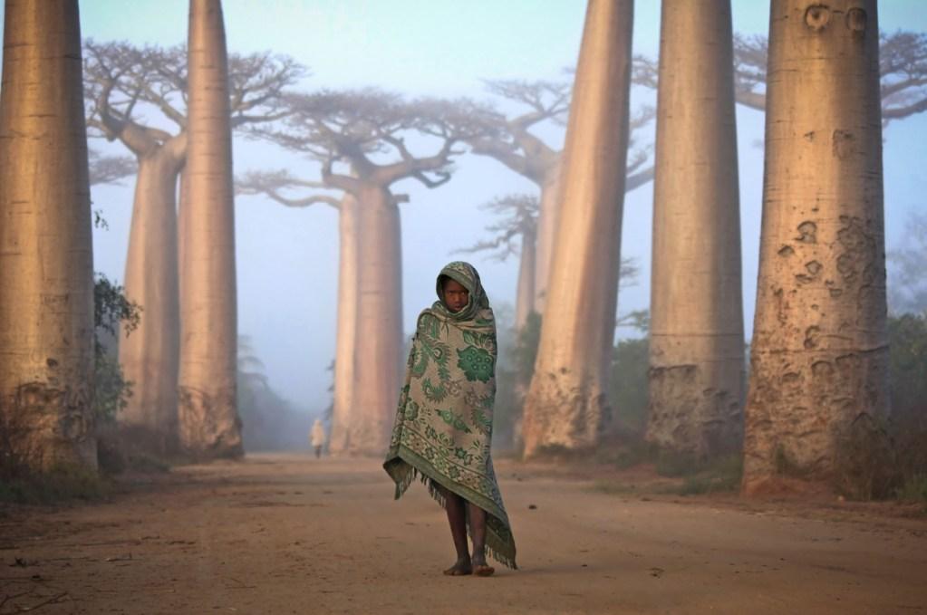 Chica camina a través de arboles baobab