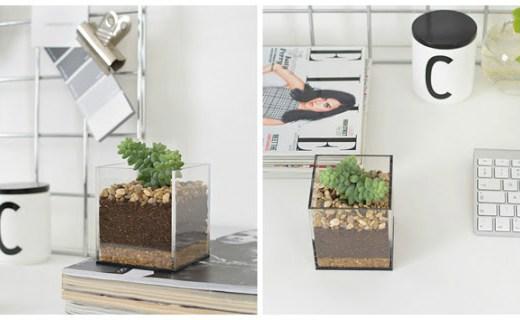 diy-tutorial-haz-terrario-suculentas
