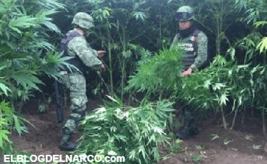 Militares destruyen campamentos del narco en Coronado