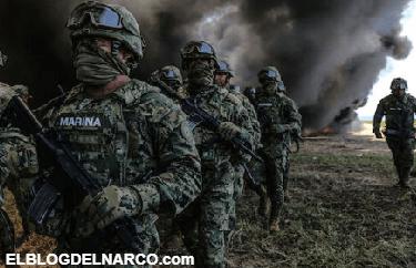 Queman toneladas de cocaína y mariguana en Acapulco, Guerrero