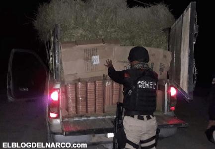 Ocultas entre pacas de alfalfa llevaba mas de 1 tonelada de marihuana en Nuevo León