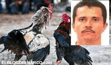 'El Mencho' apostó hasta dos millones de pesos en peleas de gallos