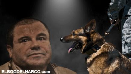 """Esta es la verdad sobre Joaquín """"El Chapo"""" Guzmán Loera y su miedo a los perros"""