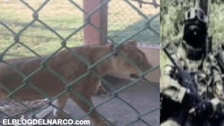 Rancho del CJNG donde sospechan que leones y cocodrilos eran alimentados con víctimas
