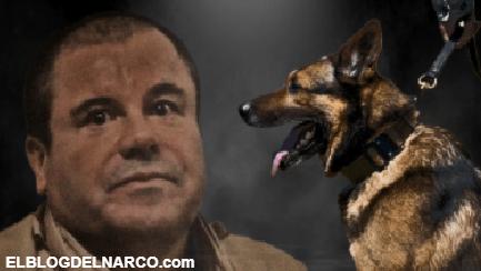 """Así es la verdad sobre los perros """"huele Chapo"""" que vigilaban al capo Joaquín Guzmán Loera"""