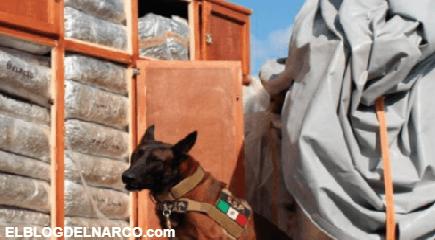 Caen 2 Militares, Elementos de la Guardia Nacional con 450 kg de Mariguana y 15 de Metanfetamina