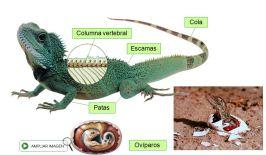 Características reptiles